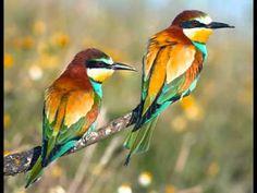 Couple of birds. Photo of couple of birds - focus in the first plane , Two Birds, Wild Birds, Love Birds, Beautiful Birds, Images Of Colours, Bird Poster, Parrot Bird, Bird Perch, All Nature