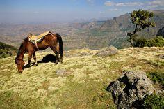 Cheval dans le parc national des montagnes du Simien #Ethiopia #Éthiopie
