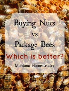 Buying nucs vs package bees- which is better? Package Bees, Honey Bee Hives, Honey Bees, Raising Bees, Backyard Beekeeping, Bee Friendly, Bee Happy, Save The Bees, Busy Bee