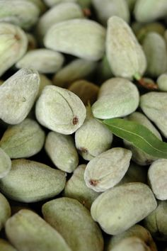 green almonds from she who eats: before the beginning of summer ends