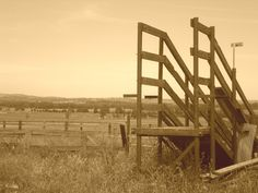 Cattle Gate, Coldstream, Victoria Australia Sepia by Andrea George