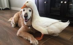 from enemies to friends adorable story about weird friendship 10 pictures 9