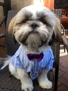15 Bits Of Fashion Advice From Dogs Who Are More Stylish Than Human Beings