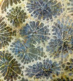 thestylishgypsy:  Coral Slab by ElaineSelene