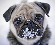 Ej, de kutya hideg van! :) Ki ne mozduljatok.  Válogassatok, rendeljetek kényelmesen otthonról. Mobiltelefonok, tabletek, okosórák, tokok, kiegészítők egy helyen. http://skyphone.hu/