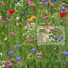 Naklejki  pora roku, flora, przyroda - widok na kwiaty na łące ✓ Szeroki wybór materiałów ✓ Dostosujemy produkt do Twoich potrzeb ✓ Sprawdź opinie naszych klientów!