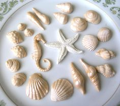 fondant seashells