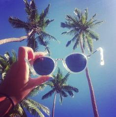 Palm trees and shades