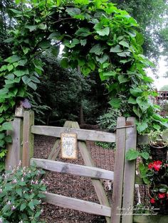 diy garden a simple branch arbor, gardening, Branch Arbor this summer with moonflower purple hyacinth vine covering it