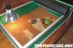 TortoiseCare.org - Tortoise Care Information, Tortoise Housing, Tortoise Keeping, Tortoise Caresheet, Pet Tortoise, Tortoise Care Sheet, Sulcata Tortoise Care
