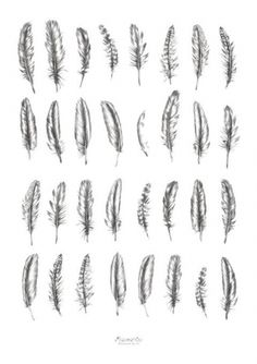Feather tattoo options, I like some of the beat up looking ones because they could symbolize a beat up or broken soul can still fly :)