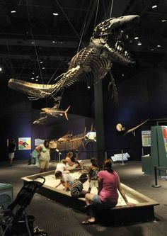 The Museum of Science and History (MOSH) is located downtown Jacksonville, Florida.