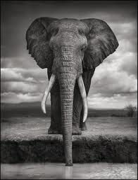 animal photography - Google Search