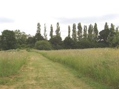 brent river park - Google Search River Park, Beautiful Park, Past, Country Roads, Spaces, Google Search, Green, Image, Past Tense