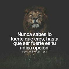 Magic Quotes, Wisdom Quotes, Me Quotes, Cute Spanish Quotes, Spanish Inspirational Quotes, Positive Phrases, Motivational Phrases, Lion Quotes, Quotes En Espanol