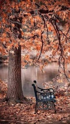 Scenic view The post Scenic view autumn scenery appeared first on Trendy. Beautiful Nature Wallpaper, Beautiful Landscapes, Autumn Photography, Landscape Photography, Photography Jobs, Photography Courses, Photography Business, Wedding Photography, Photography Competitions