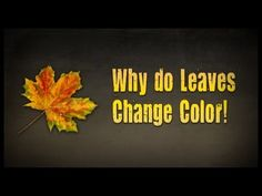 Celebrate the changing seasons with this video outlining the science behind why leaves change colors
