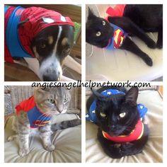 #PetSmart Spooktacular #Pet #Costumes Product Review