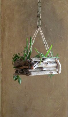 Going with Perfection by Decorating House with Hanging Orchids - diiiy - Orchideen Driftwood Jewelry, Driftwood Projects, Driftwood Art, Hanging Orchid, Deco Nature, Branch Decor, Garden In The Woods, Nature Crafts, Jewellery Storage
