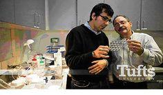 L'Università dell'Illinois crea lamine elettroniche ultrasottili e biodegradabili. Costituite da magnesio, silicio e proteine della seta, questi piccoli dispositivi sono totalmente assorbibili dall'ambiente, in un periodo di tempo che può variare a seconda delle esigenze. http://www.sorgeniaecopensiero.it/2012/10/02/rimedi-elettronici-si-ma-solo-se-si-sciolgono-in-acqua/ #ecopensiero