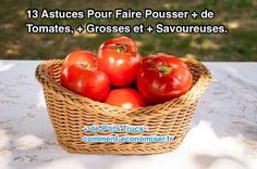 13 Tips for Growing More, Bigger Tomatoes .- 13 Astuces Pour Faire Pousser Plus de Tomates, Plus Grosses et Plus Savoureuses. how to grow beautiful tomatoes -