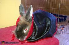 Bunnicula the Vampire Bunny - 2013 Halloween Costume Contest via @costumeworks