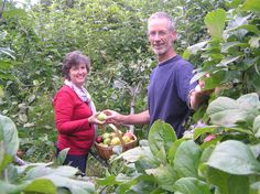 The Guyton's Forest Garden in Riverton (NZ). Incredibly productive!
