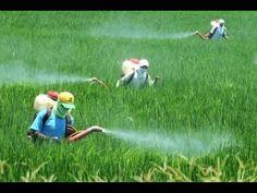 Cómo Rehabilitar Tierras Usadas en la Agricultura - TvAgro por Juan Gonz...