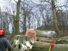 #arboristliverpool tree felling liverpool#