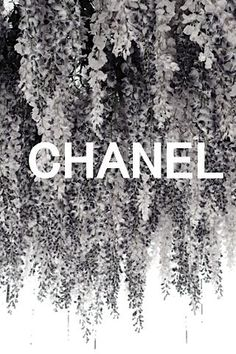 black&white picture/print with white font (Chanel Campaign) Black And White Picture Wall, Black And White Pictures, Black White, Bedroom Wall Collage, Photo Wall Collage, Boujee Aesthetic, Aesthetic Pictures, Aesthetic Vintage, Aesthetic Iphone Wallpaper