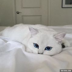 One of the most beautiful cats I have ever seen...
