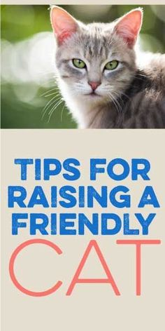 5 Tips For Raising A Friendly Cat - Pets and Animals - Cat Care Tips, Pet Care, Pet Tips, Crazy Cat Lady, Crazy Cats, I Love Cats, Cool Cats, Gatos Cats, Kitten Care