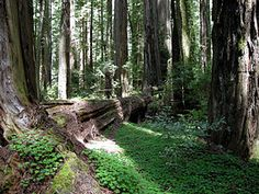 Humboldt Redwoods State Park is a state park of California, United States, containing Rockefeller Forest, the world's largest remaining contiguous old-growth forest of coast redwoods. It is located 30 miles (48 km) south of Eureka, California, near Weott in southern Humboldt County, within Northern California, USA