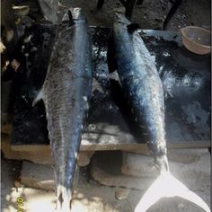 King fish chennai
