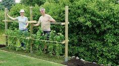 Himbeerspalier bauen