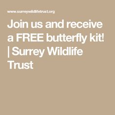 Join us and receive a FREE butterfly kit!   Surrey Wildlife Trust