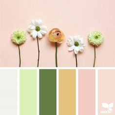 today's inspiration image for { color spring } is by @in_somnia_ ... thank you, Judith, for another incredible #SeedsColor image share!