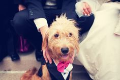 Puppy love // Photo by Mike // #minneapolisweddingphotography #minnesotawedding