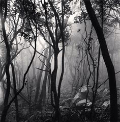 Mist Shrouded Forest, Gageo-do, Shinan, South Korea, 2012 Michael Kenna,