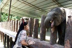 Sierociniec dla słoni