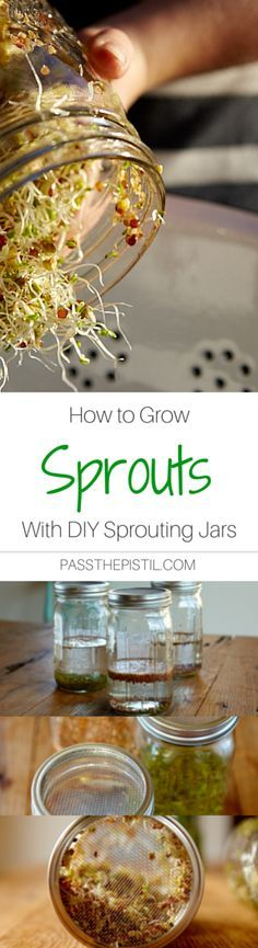 How to Grow Sprouts in DIY Sprouting Jars