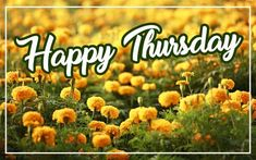 Beautiful Happy Thursday Image with flowers background for Wish Someone A Beautiful Happy Thursday. Happy Thursday Images, Wishes Images, Flowers, Beautiful, Florals, Flower, Bloemen