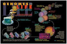 Genomics_GTL_Pictorial_Program.jpg
