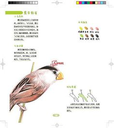 Chinese Color Pencil Drawing 26 Lovely Birds Painting Art Book