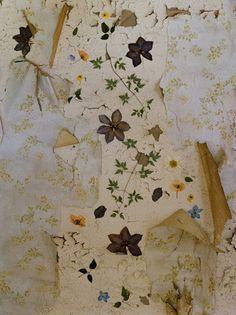"série ""blumen ohne wasser"" (Fleurs sans eau), photographe allemande Maria Grossmann. papier mural usé"