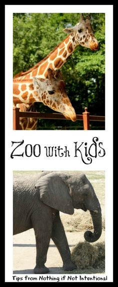 Visiting the Zoo with Kids--books to read, tips to remember, souvenirs to make, and ideas for zoo-related play!