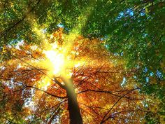 Bienestar Psico-Social : Cómo pasar del verano al otoño sin sufrir en el in...