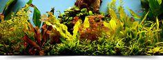 Kde koupit rostliny - levnejsi, rychle dodani Aquarium, Painting, Art, Goldfish Bowl, Art Background, Aquarium Fish Tank, Painting Art, Kunst, Paintings