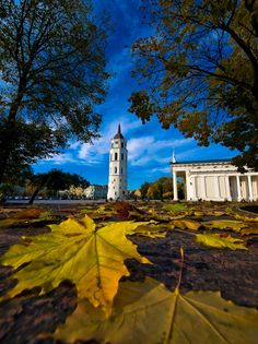 Lithuania, Vilnius- wonderful trip with Ag Forestry Class XIV - so many memories.