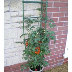 Extra Image, Tomato Cages, Plant Supports, Tomato Plants, Tomatoes